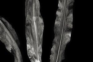 Corn leafs