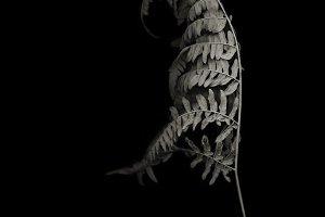 Dry fern /LARGE