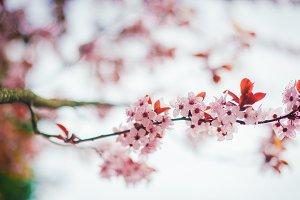 Flower blossom tree