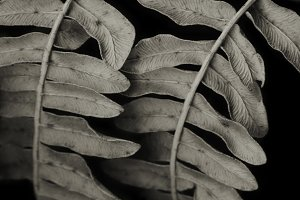 Detail of fern /LARGE