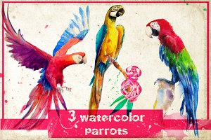 3 watercolor parrots