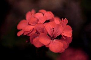 Pink flower #4