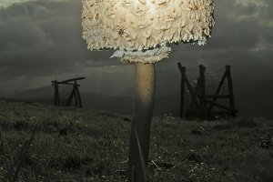 Mushroom in the dark