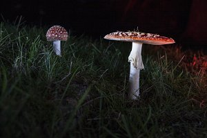 Mushroom in the dark