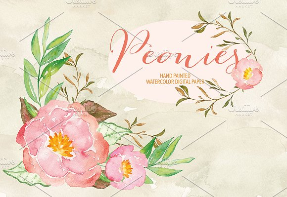 Watercolor peonies in Illustrations - product preview 1