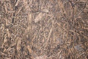 Old wood shavings brown texture