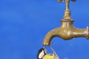 Big tit drinking from faucet.