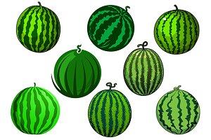 Fresh juicy green watermelon fruits