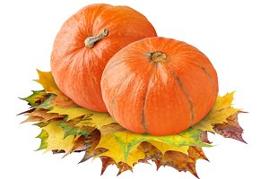 Pumpkins on autumn leaves isolated