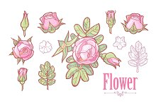 Rose Elements Set. Vector & Raster