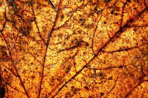 Autumn leave. Close up