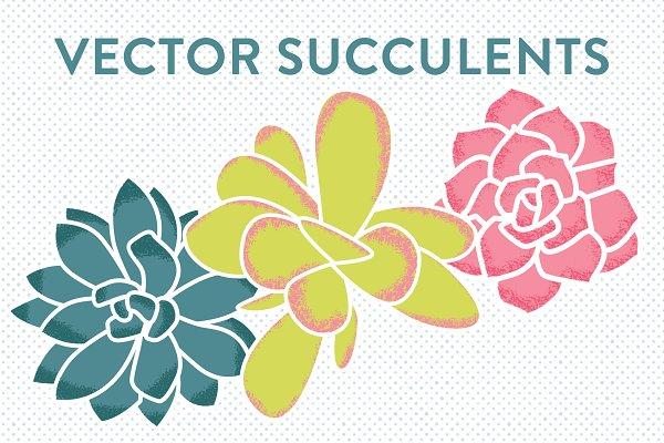 Vector Succulents