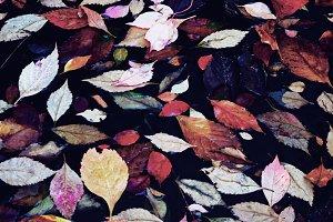 Autumn foliage in water