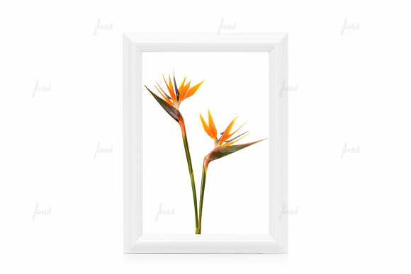 Download White styled frame isolated mockup