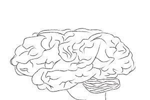brain, sketch