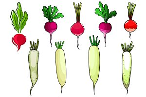 Red, white and pink radish or daikon