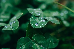 Green grass and water droplets