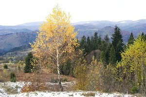 Autumn in Carpathian Mountains
