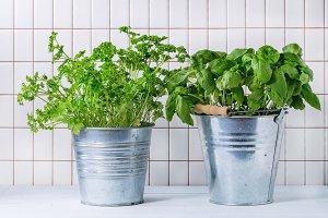 Herbs in pot