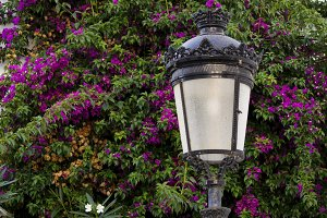 Lamp with bougainvillea