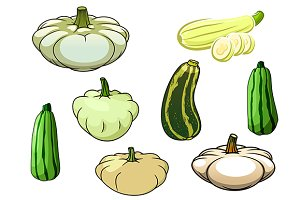 Zucchini, pumpkin and pattypan