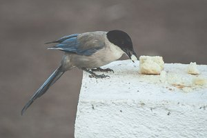 Bird eat bread