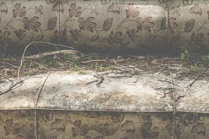 Vintage sofa and pine needles on it