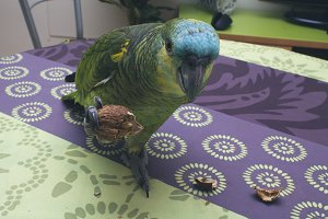 testparrot at home