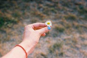 Hand holding a daisy flower