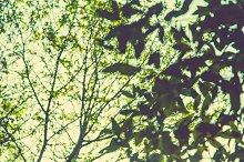 iseeyouphoto forestbokeh 4