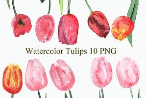 Watercolor Tulips Clip Art