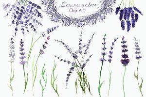 Watecolor Lavender Clip Art