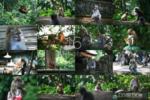 16 Photos of Monkeys,Bundle