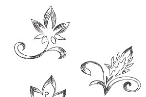 flowers, ornament, vector, sketch