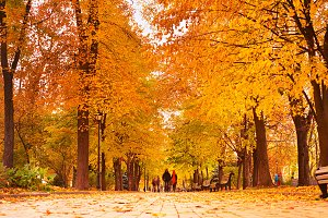Romantic Autumnal park walking