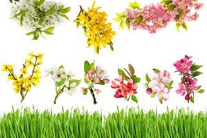 Spring blossoms green grass