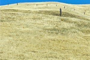 Grassland with Fence
