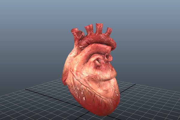 3D Characters: Tiger Shark Studios - Animated Heart