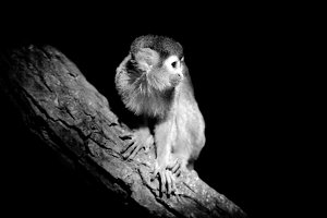 Monkey on dark background