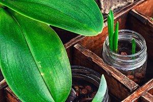 seedlings spring plants