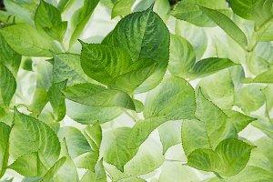 Spring flora leaf background