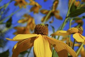Yellow sunny flower