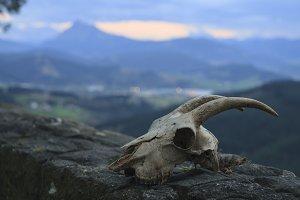 Skull in nature