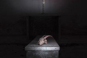 Skull in altar