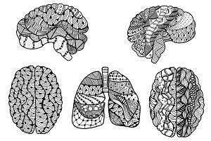 Human Brain and  lungs