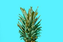 Pineapple on blue backround