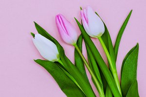 Beatiful Flowers. Minimal style
