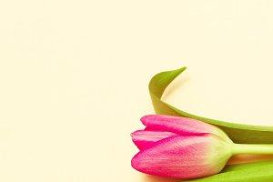 Tulip. Minimal Fashion