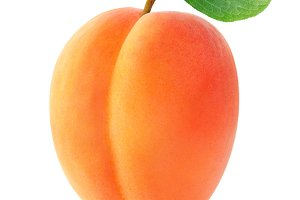 Isolated apricot fruit