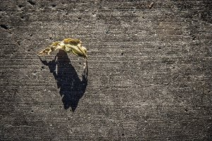 Leaf on Cement (Photo)